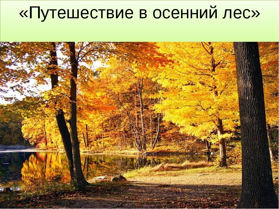«Путешествие в осенний лес»