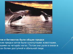 У китов и бегемотов были общие предки Далёкие предки китов были сухопутными ж