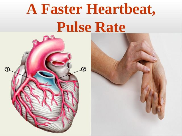 A Faster Heartbeat, Pulse Rate