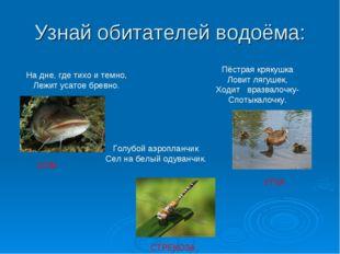 Узнай обитателей водоёма: На дне, где тихо и темно, Лежит усатое бревно. Пёст