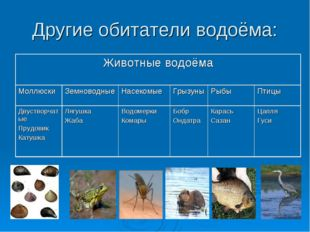 Другие обитатели водоёма: