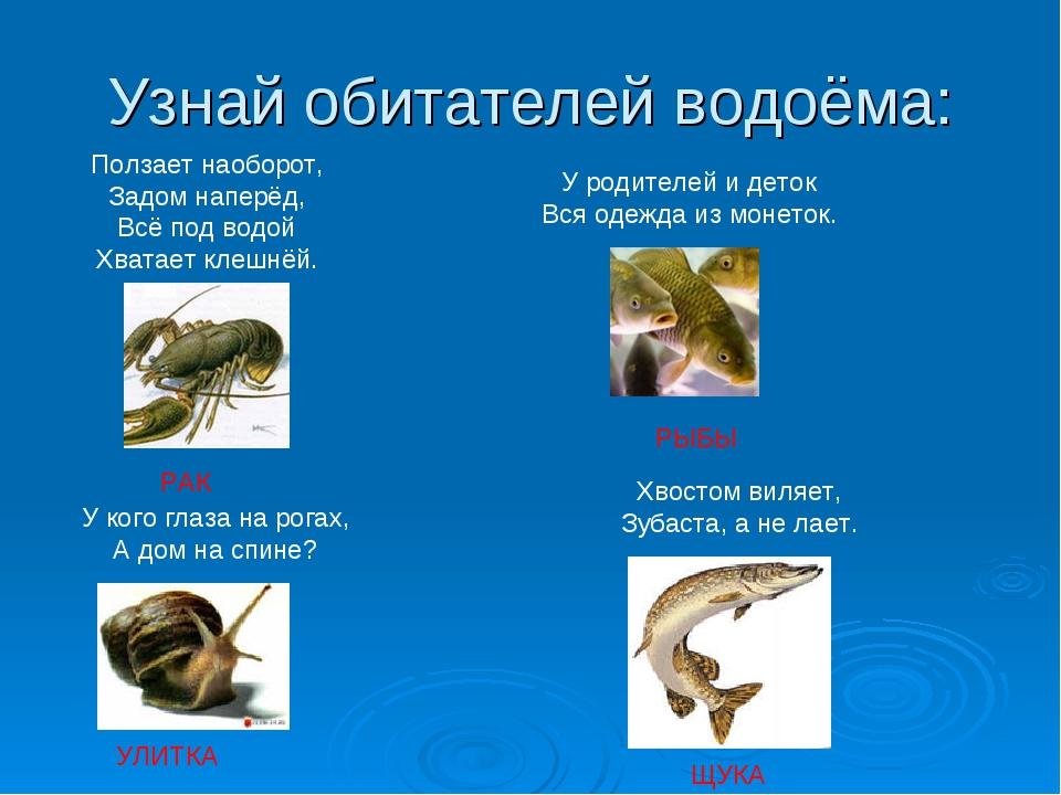 Узнай обитателей водоёма:  Ползает наоборот, Задом наперёд, Всё под водой Х...