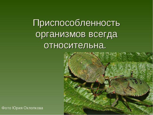 Приспособленность организмов всегда относительна. Фото Юрия Охлопкова