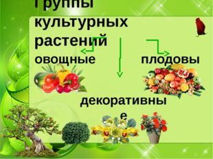 Группы культурных растений овощные плодовые декоративные