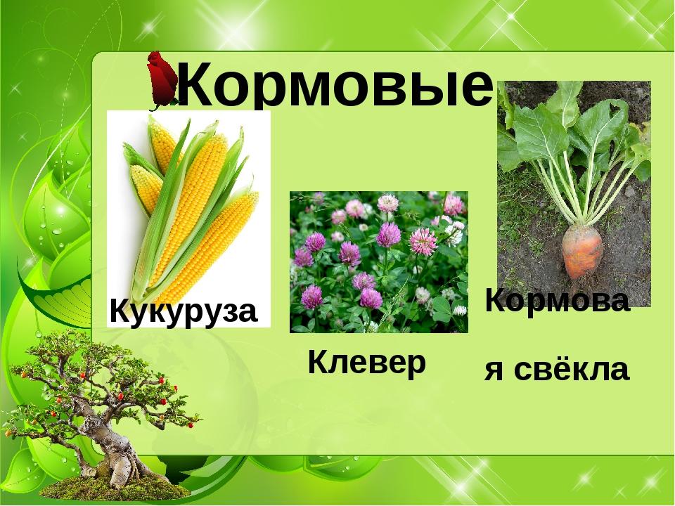Кормовые Кукуруза Кормовая свёкла Клевер