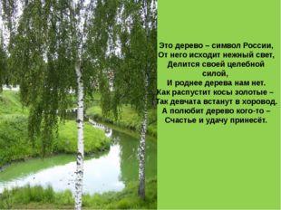 Это дерево – символ России, От него исходит нежный свет, Делится своей целебн