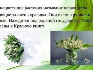 Раннецветущие растения называют первоцветы. Первоцветы очень красивы. Они оче