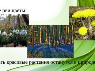 Не рви цветы! Пусть красивые растения останутся в природе.