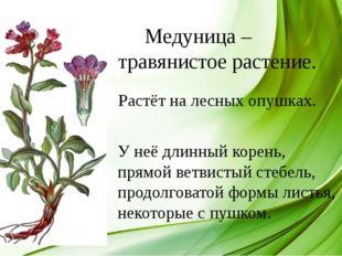 Медуница – травянистое растение. Растёт на лесных опушках. У неё длинный кор