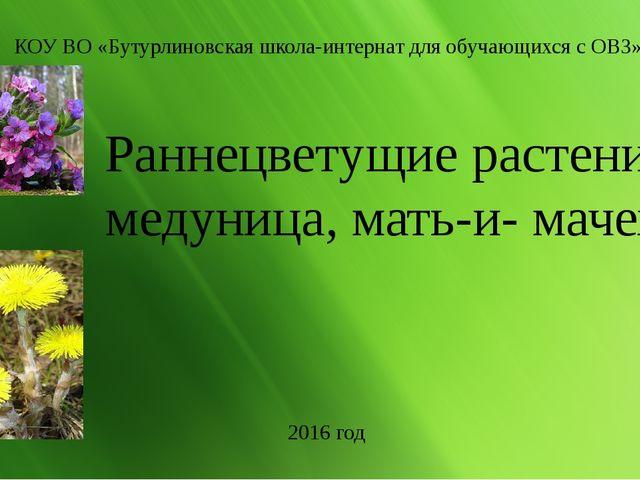 Раннецветущие растения: медуница, мать-и- мачеха. КОУ ВО «Бутурлиновская шко...