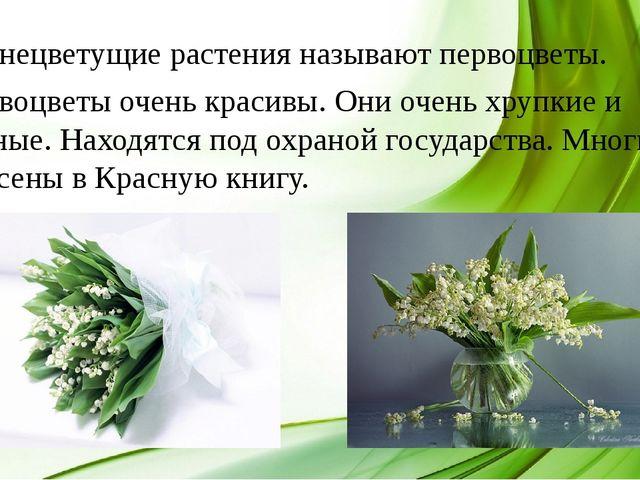 Раннецветущие растения называют первоцветы. Первоцветы очень красивы. Они оче...