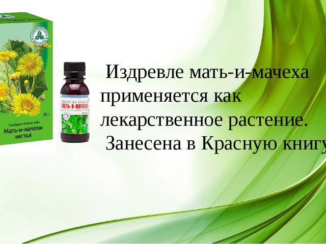 Издревле мать-и-мачеха применяется как лекарственное растение. Занесена в Кр...