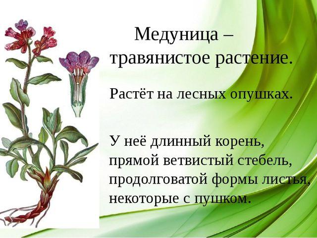 Медуница – травянистое растение. Растёт на лесных опушках. У неё длинный кор...