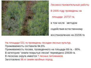 На площади 531 га проведены посадки лесных культур. Приживаемость составила