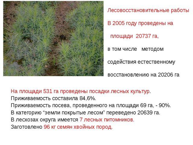 На площади 531 га проведены посадки лесных культур. Приживаемость составила...