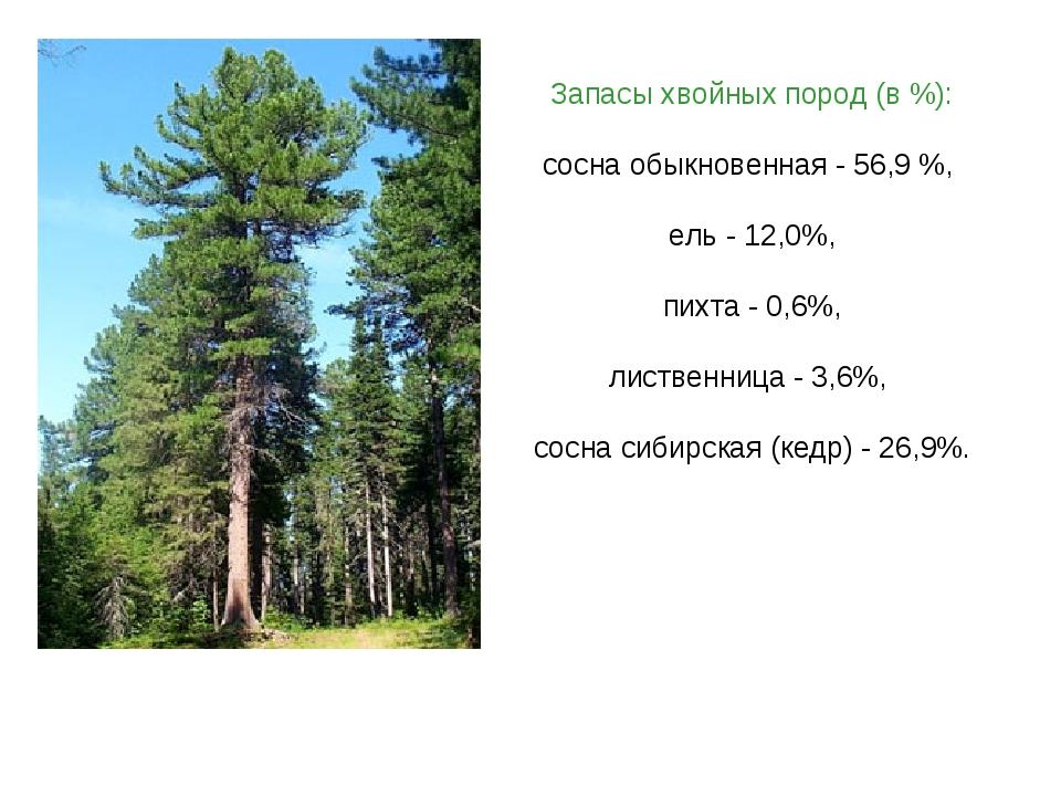 Запасы хвойных пород (в %): сосна обыкновенная - 56,9 %, ель - 12,0%, пихта -...