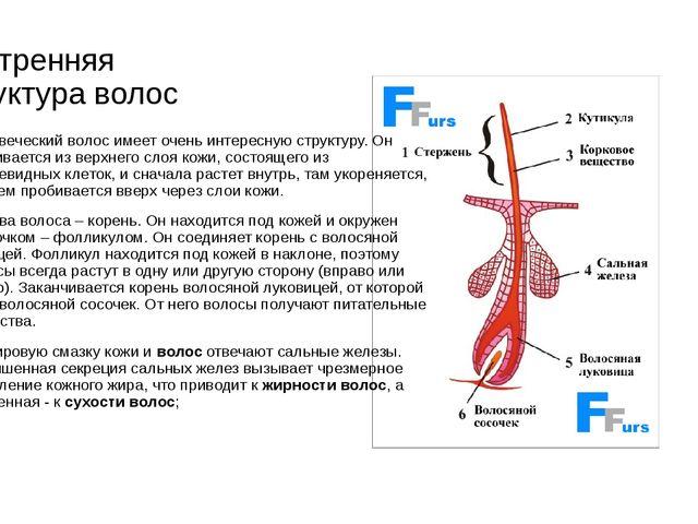 Внутренняя структура волос Человеческий волос имеет очень интересную структур...