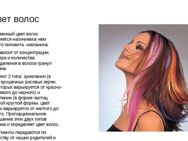 Цвет волос . Естественный цвет волос объясняется наличием в нем цветного пигм...