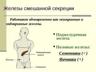 Железы смешанной секреции Работают одновременно как экзокринные и эндокринные