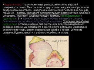 Надпочечники - парные железы, расположенные на верхней поверхности почек. Они