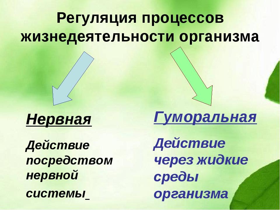 Регуляция процессов жизнедеятельности организма Нервная Действие посредством...
