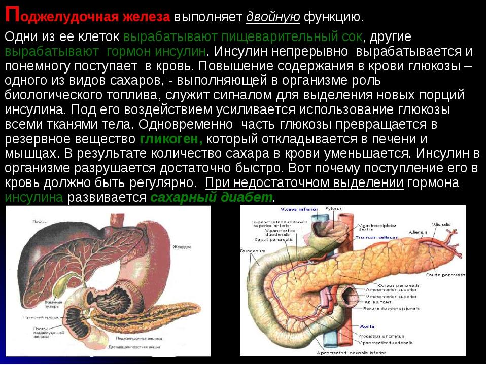 Поджелудочная железа выполняет двойную функцию. Одни из ее клеток вырабатываю...