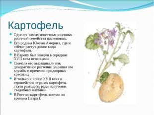 Картофель Одно из самых известных и ценных растений семейства пасленовых. Его