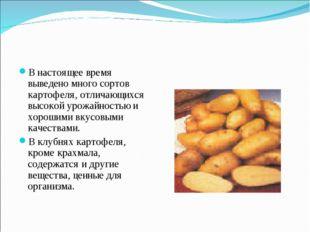 В настоящее время выведено много сортов картофеля, отличающихся высокой урожа