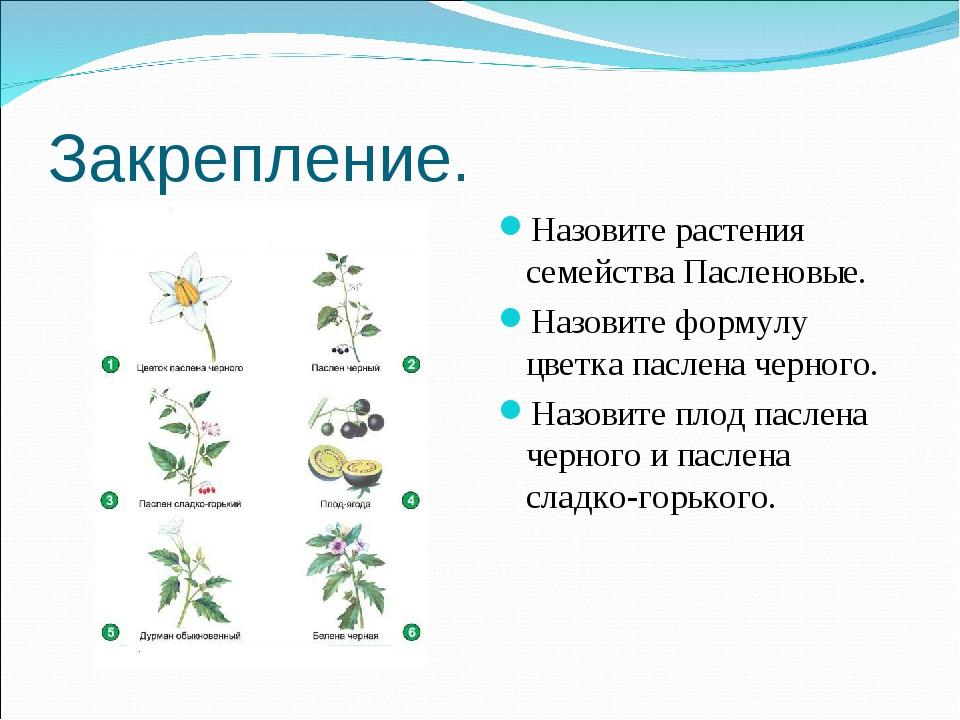 Закрепление. Назовите растения семейства Пасленовые. Назовите формулу цветка...