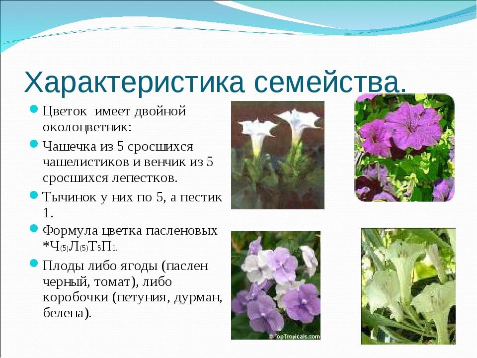 Характеристика семейства. Цветок имеет двойной околоцветник: Чашечка из 5 сро...