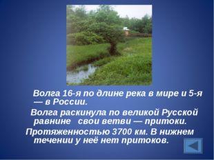 Волга 16-я по длине река в мире и 5-я — в России. Волга раскинула по великой