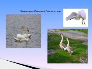 Зимующие в Северной Осетии птицы