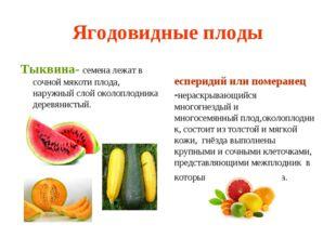 Ягодовидные плоды Тыквина- семена лежат в сочной мякоти плода, наружный слой