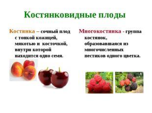 Костянковидные плоды Костянка – сочный плод с тонкой кожицей, мякотью и косто