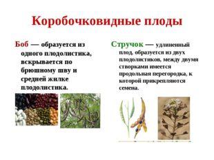 Коробочковидные плоды Боб — образуется из одного плодолистика, вскрывается по
