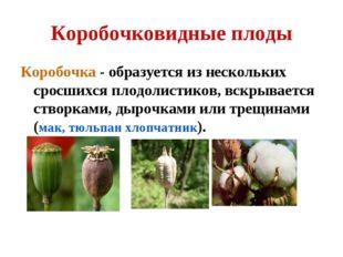 Коробочковидные плоды Коробочка - образуется из нескольких сросшихся плодолис