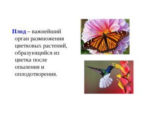 Плод – важнейший орган размножения цветковых растений, образующийся из цветк