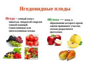 Ягодовидные плоды Ягода - сочный плод с мякотью, покрытой снаружи тонкой кожи