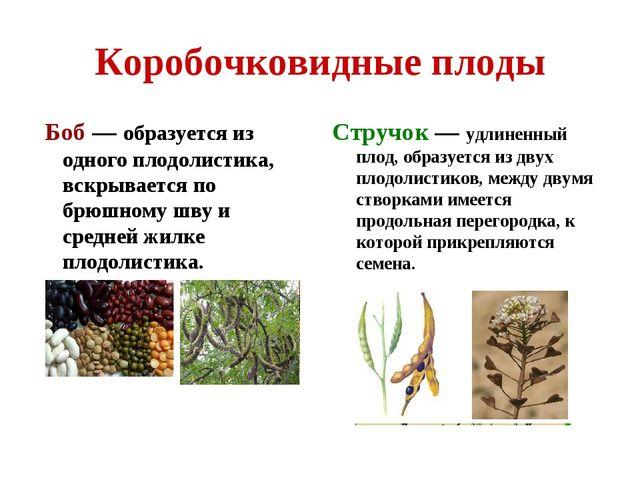 Коробочковидные плоды Боб — образуется из одного плодолистика, вскрывается по...