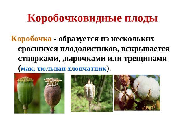Коробочковидные плоды Коробочка - образуется из нескольких сросшихся плодолис...