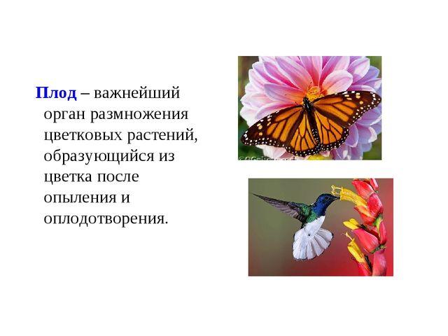 Плод – важнейший орган размножения цветковых растений, образующийся из цветк...