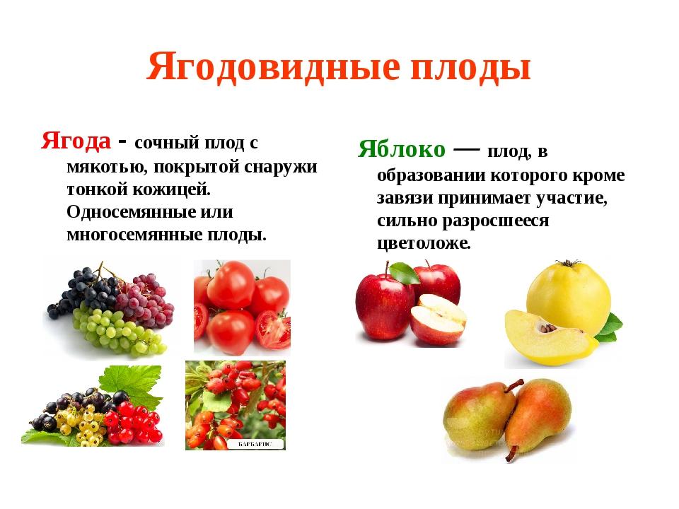 Ягодовидные плоды Ягода - сочный плод с мякотью, покрытой снаружи тонкой кожи...