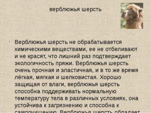 верблюжья шерсть Верблюжья шерсть не обрабатывается химическими веществами, е