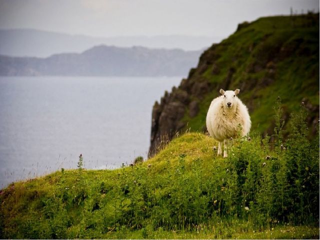 От овечки до пледа презентацию подготовила Фомина Мария Леонидовна ученица 4...