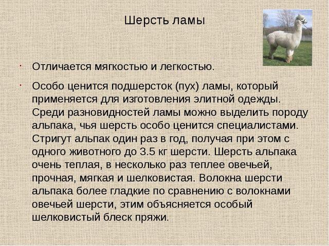 Шерсть ламы Отличается мягкостью и легкостью. Особо ценится подшерсток (пух)...
