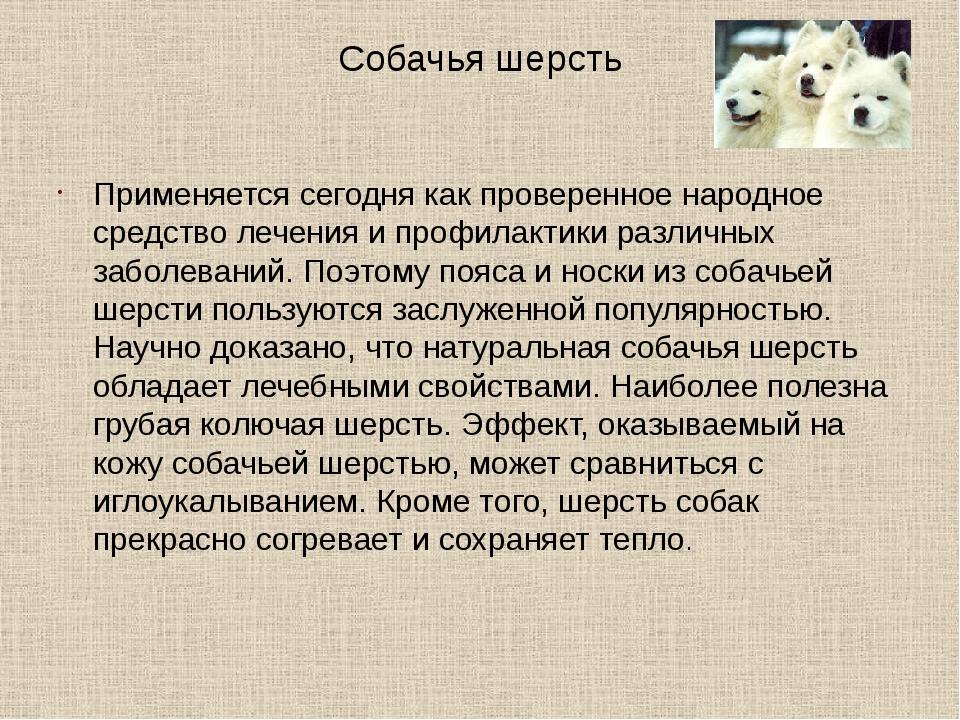 Собачья шерсть Применяется сегодня как проверенное народное средство лечения...