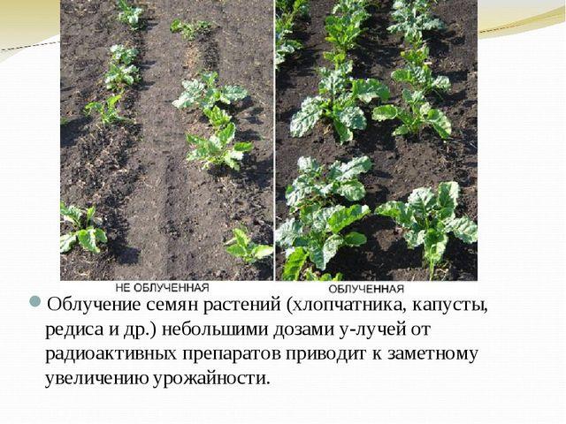 Облучение семян растений (хлопчатника, капусты, редиса и др.) небольшими доза...