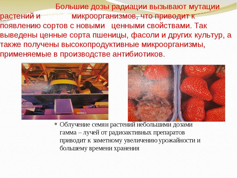 Большие дозы радиации вызывают мутации растений и микроорганизмов, что приво...