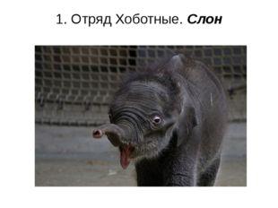 1. Отряд Хоботные. Слон