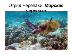 Отряд Черепахи. Морская черепаха